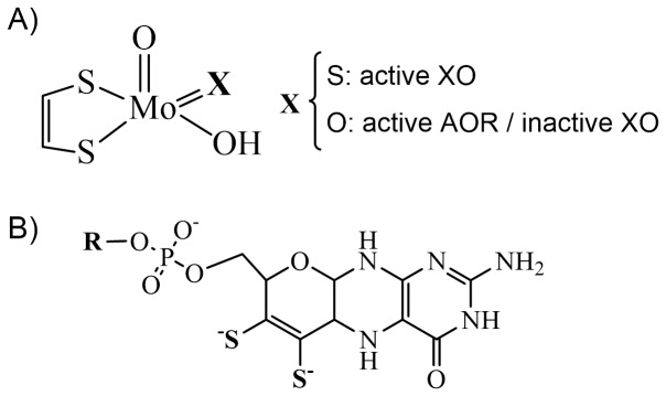 Kinetic and structural studies of aldehyde oxidoreductase from Desulfovibrio gigas reveal a dithiolene-based chemistry for enzyme activation and inhibition by H(2)O(2).